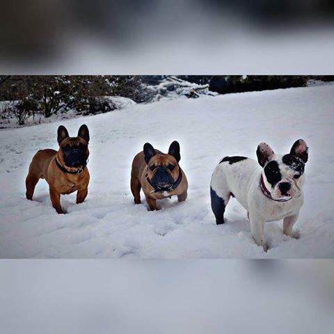 Inxs /  Idylle  /  Pearl     :  boulis dans la neige   <3