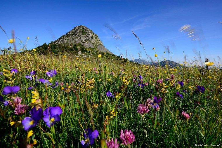 Le Mont Gerbier de Jonc , Ardèche  <3 ( à la belle saison ( Matthieu Dupont , Jollivet, 07200 Lentillères )