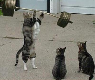 Muscle chat