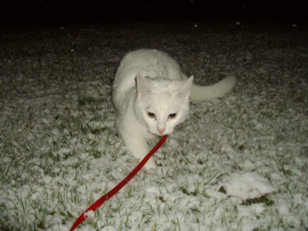 1fois ds la neige