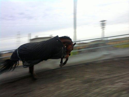 { More than a horse, a life ♥ }