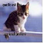 animal préférée?