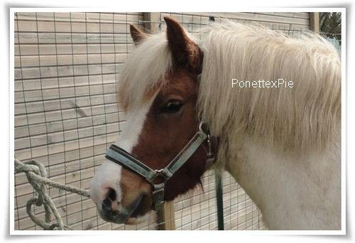 Mon petit poney ♥  Article n°4