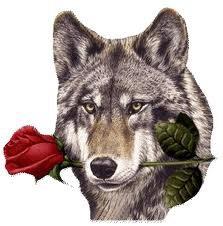 Le loup ,mon animal préféré