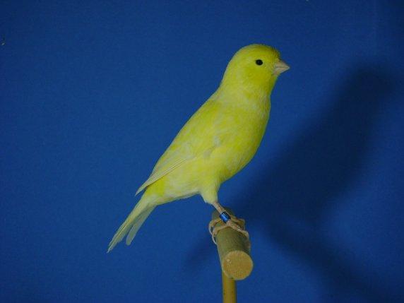 fotos canarios 2011