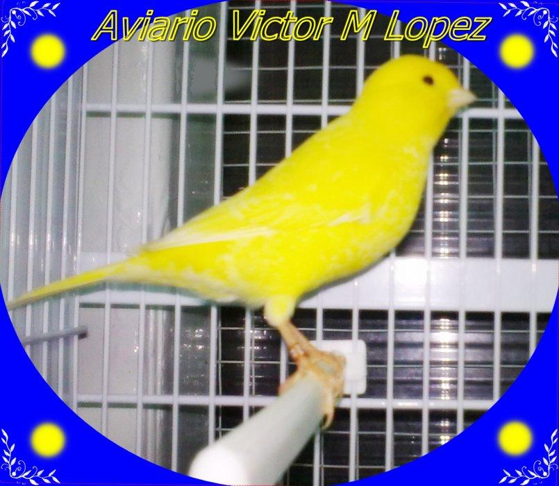 aviario Victor M Lopez Naharro