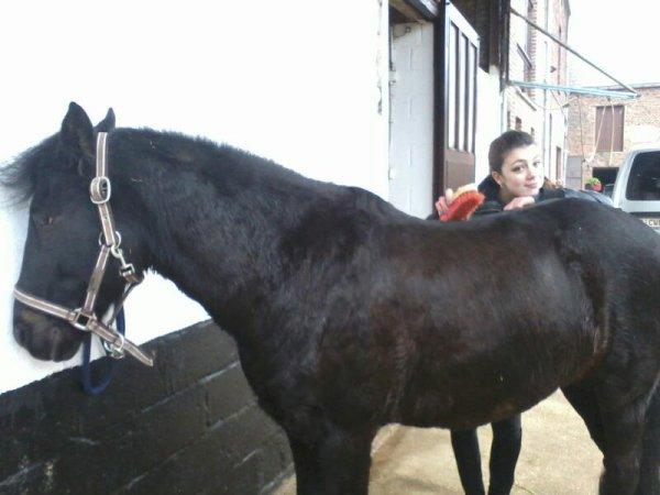 Équitation bien plus qu un sport (l)