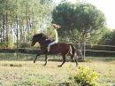 Photo de Equip-Pony