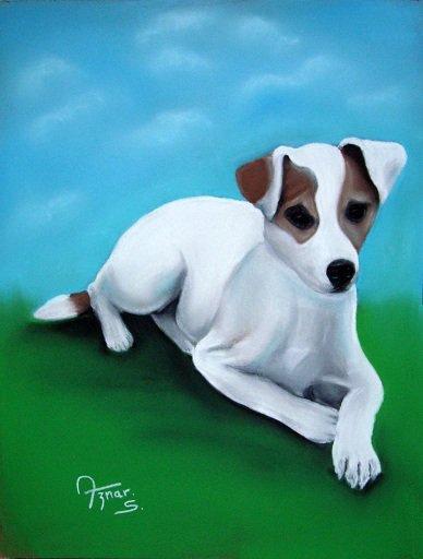 BELLE ( Jack Russel Terrier )