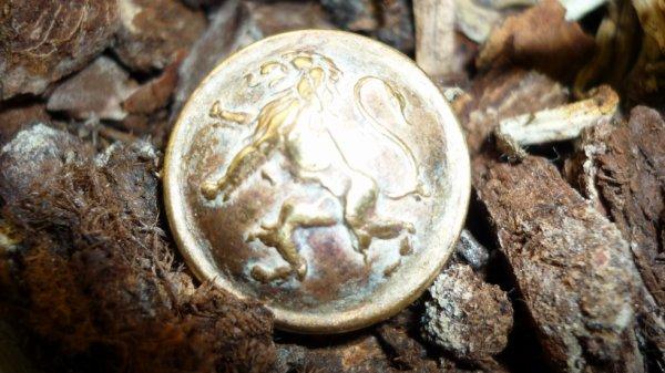 petit bouton au lion , Belgique