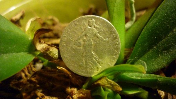 50 centimes semeuse en argent de 1903