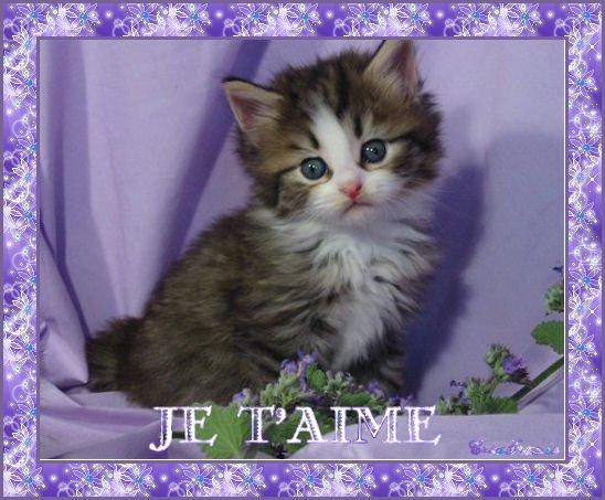 bébé chat trop mimi