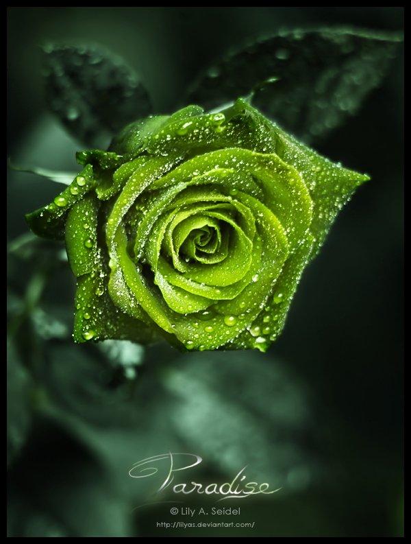 Vert. Couleur de l'espoir.   Couleur d'histoire