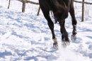 Photo de Affaires-equitations-C