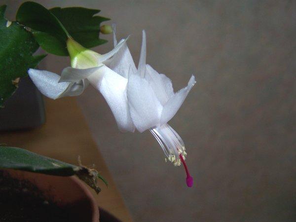 une fleur pour la soirée !!!! (rectification)