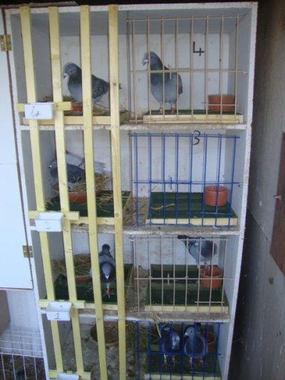 finitions des casiers de reproduction et mise en place des caillebotis .