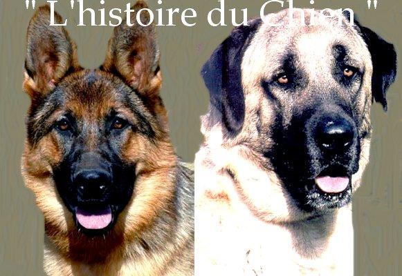""""""" L'histoire du Chien """""""