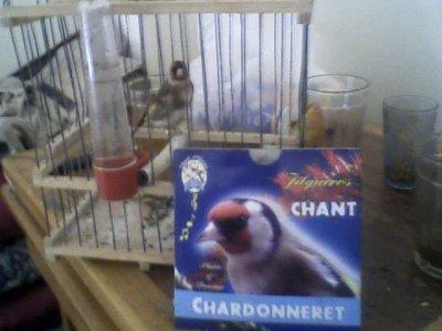 chardonneret  2004::::::::♥