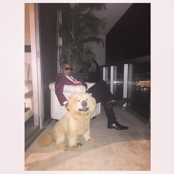 "I LOVE THIS DOG ""CHOW CHOW"" ?? #swaggman #theswaggmantv #posey #fonsdey #chowchow #louisvuitton #hermes Voir la traduction"