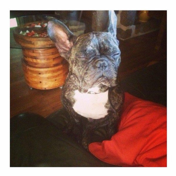 LOVE MY SWAGGY DOGGY #swaggman #theswaggmantv #posey #frenchbulldog #bouledoguefrancais #bully #jnouney