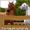 Photo de Ecurie-de-la-Harde