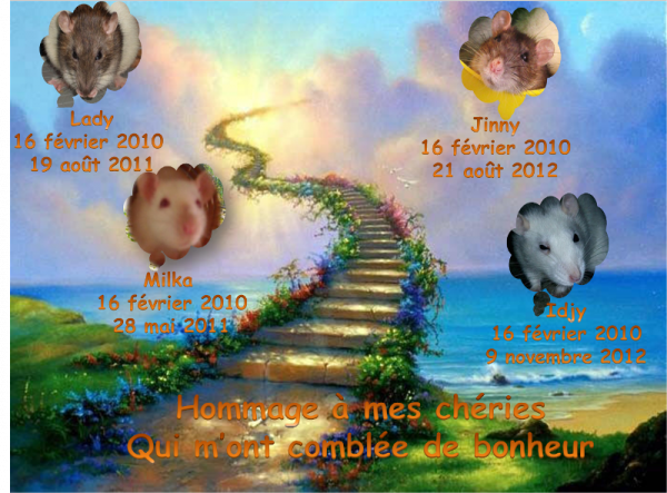 Tout d'abord, je voudrais rendre un dernier hommage à mes ratous