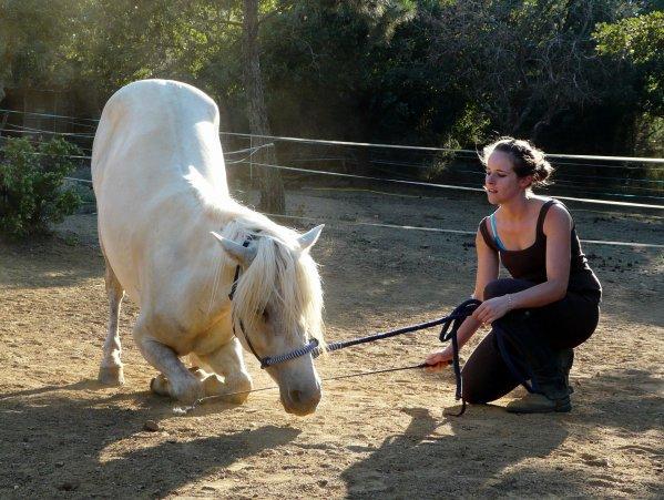 L'équitation ; Plus qu'une Simple Passion : Toute une vie.