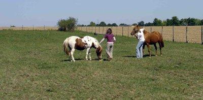 1er été avec les poneys à la maison
