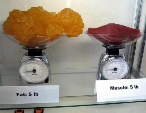 muscle VS graisse
