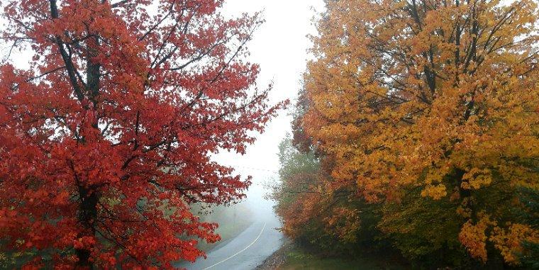 Quelle magnifique saison  que l'automne!