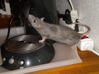 mon ratouné d'amour <3