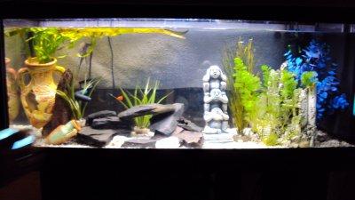mon petit aquarium