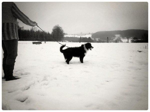 Joyce dans la neige.