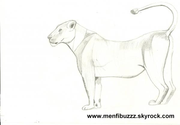 Quelques dessins menfibuzzz - Lionne dessin ...
