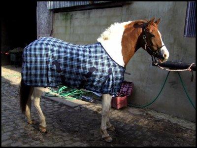 « Vous ne pouvez demander à n'importe qui de devenir votre ami..... le cheval il suffit simplement de le lui demander... mais demandez le lui vraiment.  »