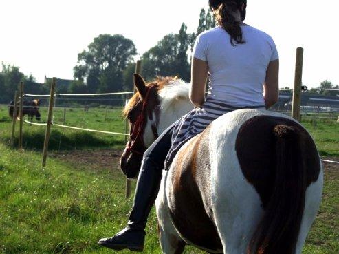 « Les chevaux aiment le silence ... »
