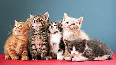 Aimez-vous les...chattes ?