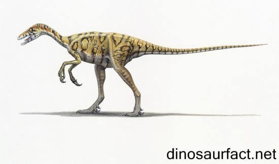 Eoraptor (nom scientifique signifiant « voleur de l'aube ») est un genre de petit dinosaure, qui a vécu pendant le Trias supérieur, entre 230 et 225 million d'années avant notre ère.