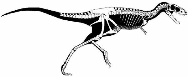 Raptorex est un genre éteint de dinosaures théropodes de la super-famille des Tyrannosauroidea ayant vécu au Crétacé inférieur, il y a 125 millions d'années dans ce qui est maintenant la Mongolie-Intérieure, région autonome de Chine,.