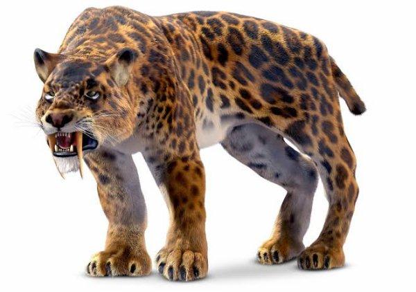 Smilodon avait une taille comparable à celle d'un lion, sa queue était toujours courte et ses griffes, comme la plupart des grands félins, étaient longues et rétractiles. Le smilodon (dents en couteaux) doit son nom à ses gigantesques canines de 18 à 20 cm de long lui servant sans doute à « poignarder » ses victimes. Il pesait 55 à 250 kg, mesurait environ 2,5 à 4 mètres et pouvait ouvrir sa gueule jusqu'à 120°.