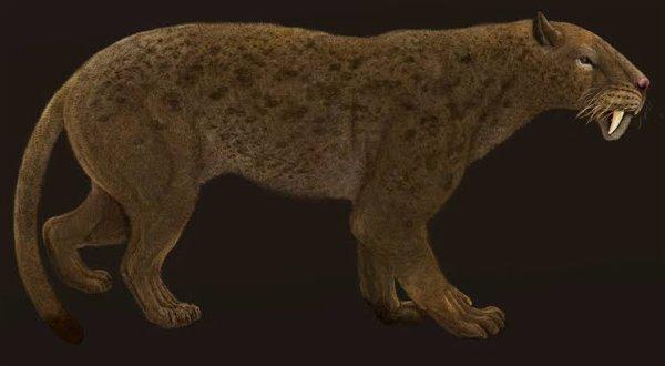 Hoplophoneus est un genre fossile de la famille des Nimravidae et sous-famille des Nimravinae, endémique de l'Amérique du Nord durant les époques Éocène et Oligocène entre 38 et 33,3 Ma (millions d'années), ayant ainsi existé durant environ 5 Ma.