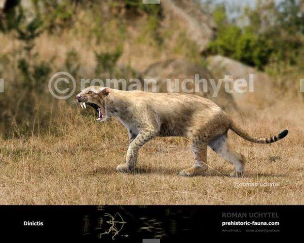 Dinictis est un genre éteint de mammifère carnivore ressemblant à un félin à dents de sabre. Il a vécu en Amérique du Nord à l'Éocène et à l'Oligocène. Il mesurait près d'1 m de long pour un poids 15 à 20 kg. Il a disparu car il a été supplanté par le Hyaenodon[réf. nécessaire]. Il grimpait aussi aux arbres[réf. nécessaire].