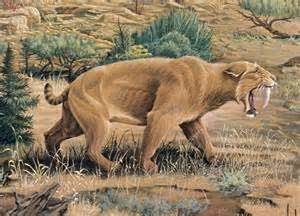 Pogonodon est un genre éteint de tigre à dents de sabre de la famille des Nimravidae, qui vivait de l'Éocène au Miocène en Amérique du Nord et en Eurasie, entre 30 et 7 millions d'années