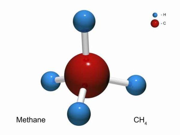 Le méthane est associé à des milieux anoxiques pauvres en espèce, mais on y trouve quelques espèces méthanotrophes et on a identifié en mer du Nord une espèce nouvelle de nématodes sans bouche ni intestin (Astomonema southwardorum (nl)), qui dominait la microfaune du sédiment d'une zone riche en méthane.