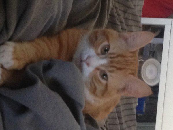 mon chat un cas a part mais je l'adore x)