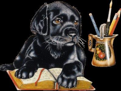 BLACK est parti au Paradis des chiens !