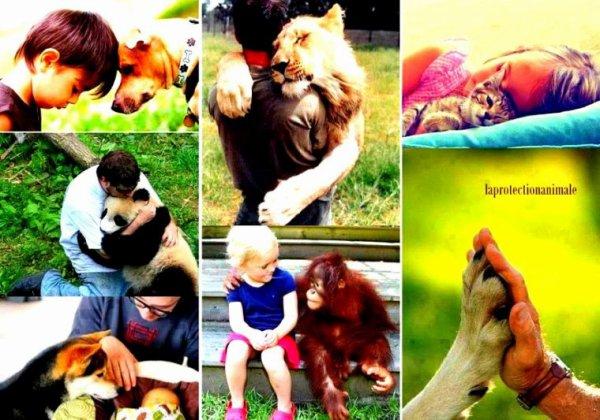 Mon but n'est pas des plus simples: je souhaite sensibiliser les gens autour de moi et les rallier à ma cause. Ça fait maintenant environ de plus me 8ans  que j'ai vraiment commencé à me préoccuper du sort des animaux, j'étais alors en CM2. Quelques années plus tard j'ai créé un blog pour la cause animale, mais à l'époque j'avais 12 ans et à cet âge on est pas vraiment objectif... aujourd'hui j'ai plus de recul et d'expérience sur le sujet, et je compte bien en user pour sensibiliser un maximum de personnes ! Qui que vous soyez, quel que soit le sujet de votre blog: n'hésitez pas à me suivre pour apprendre plein de choses sur les animaux, et surtout pour savoir comment vous pouvez leur venir en aide en fonction de vos moyens !  Toutes les critiques positives et négatives sont les bienvenues, par commentaires ou messages, du moment qu'elles sont constructives et qu'elles peuvent m'aider à améliorer ma façon de tenir le blog.
