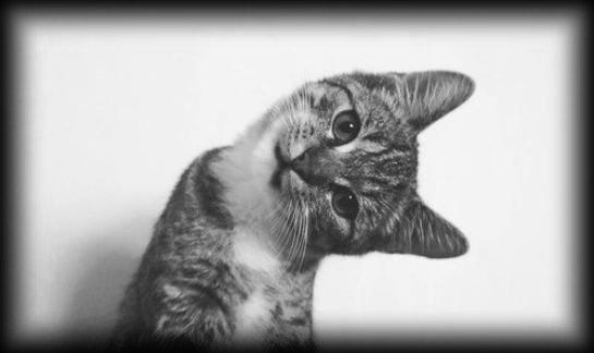 Un homme sans culture , tel un chat sans moustaches , se sent perdu !