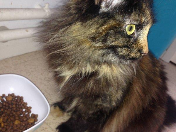 mon chat , Calîne <3
