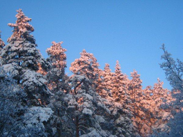 Printemps dans la neige